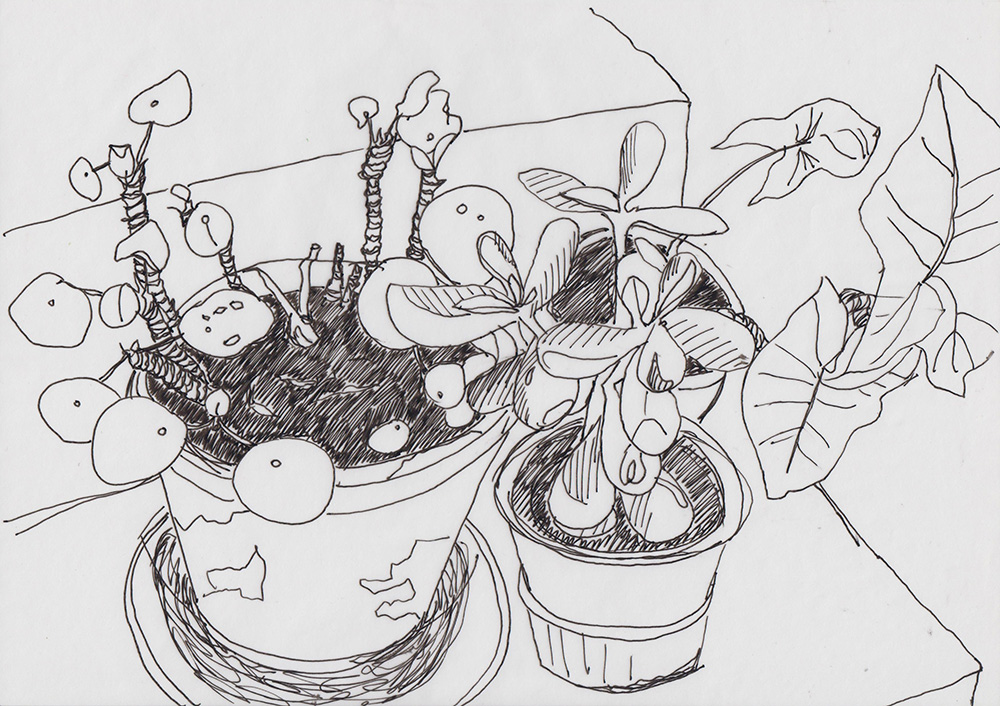 Pot plants on step, Madeleine Corcoran