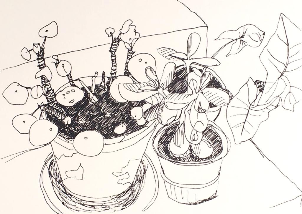 pot plants print